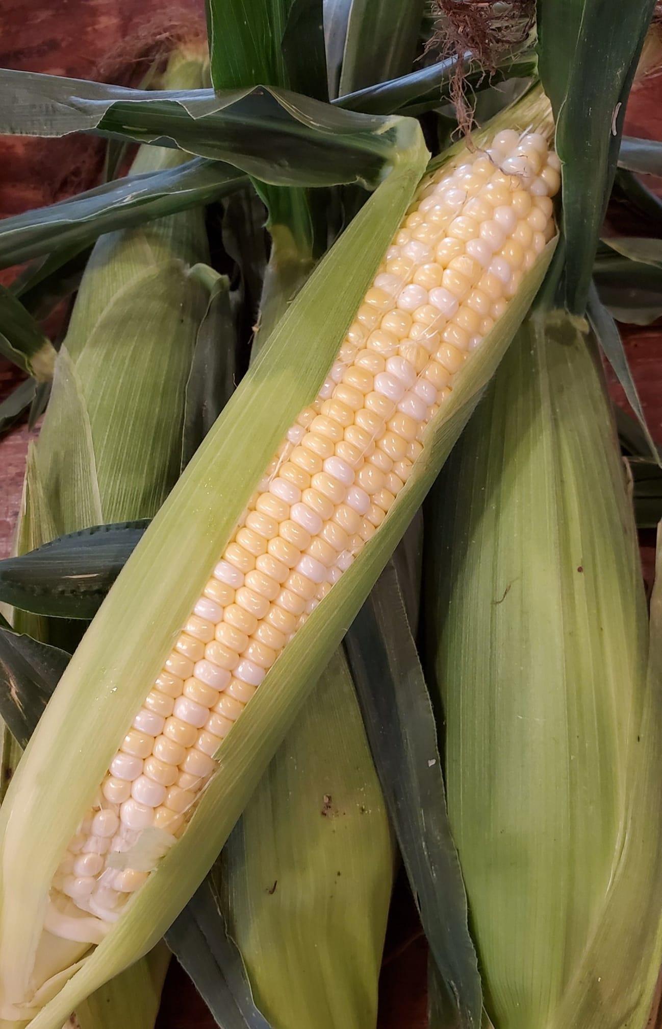 Bi-Color Sweet Corn